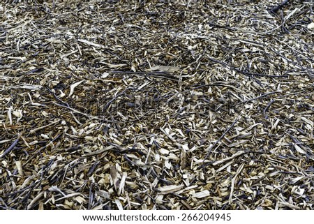 Ground cover in woods: Remains of shredded tree, for themes of development, landscaping, or the environment (center focus)