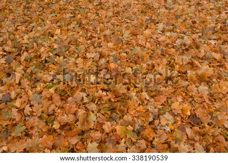Ground covered by fallen leaves. - stock photo