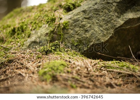 Ground in the forest - stock photo