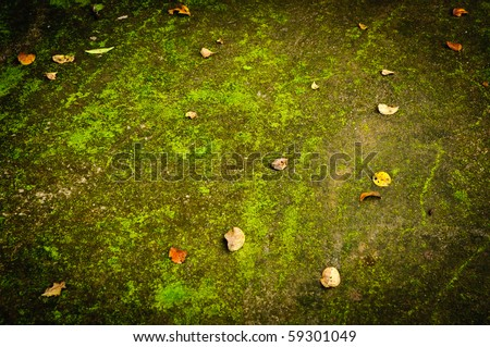 Ground path with moss - stock photo