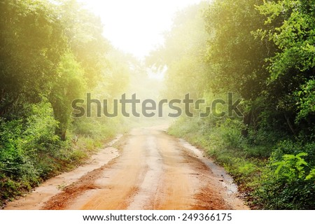 ground road and bush with savanna landscape background - stock photo