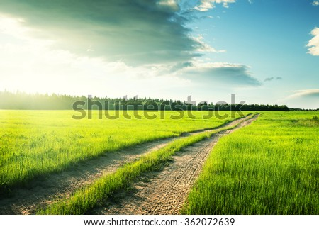 ground road and field of spring grass