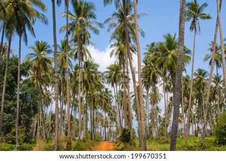 Ground road in jungle. Island Koh Mak, Thailand. - stock photo