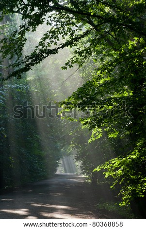 Ground road leading across old deciduous forest with beams of light entering stand - stock photo