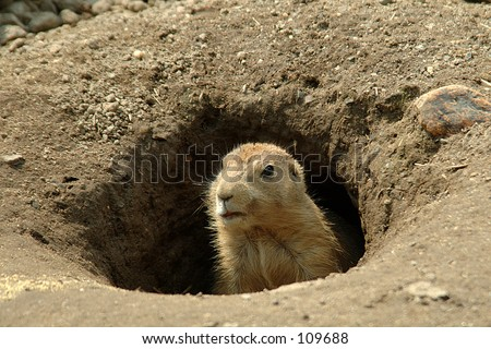 Groundhog in the hole