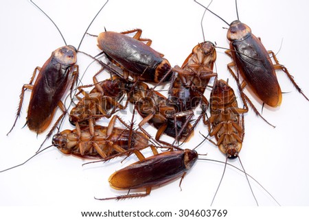 Group dead cockroach isolate on white background - stock photo