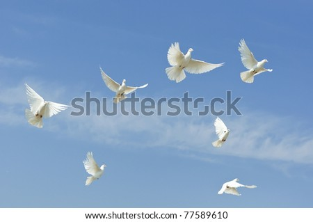 Group flying dove, pigeon on sky - stock photo