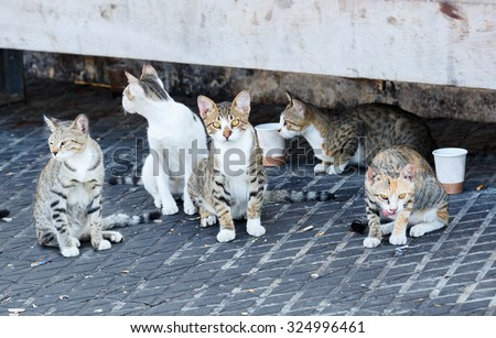 Group homeless cats under a concrete bench in sea port - stock photo