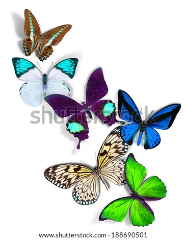 group of a butterflies on white background - stock photo