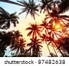 Group of a palm trees with red and blue sky on the background - stock photo