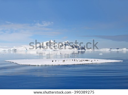 Group of Adelie penguins on the floating ice, with mountain range covered by snow in background, blue sky, Antarctic Peninsula - stock photo