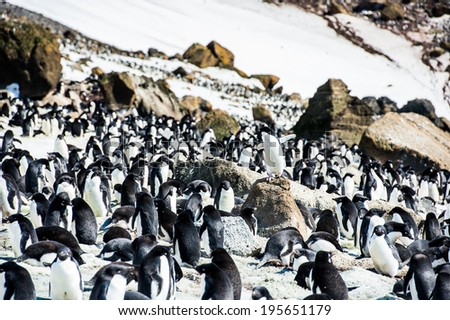 Group of Adelie penguins (Pygoscelis adeliae) on the snow on the Antarctic coast - stock photo