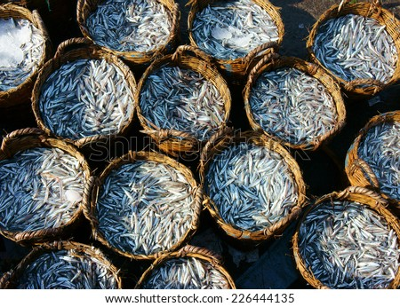 Group of anchovy basket at fishing outdoor farmers market, anchovy is material to make fish sauce, very delicious Vietnamese food, many produce of fishery cover by ice to keep fresh - stock photo
