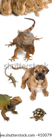Group of animals in front of white background, studio shot - stock photo