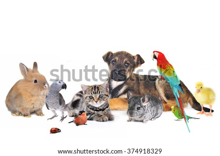 group of animals on white background - stock photo