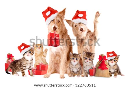 Group Of Animals with Santa hats and presents - stock photo