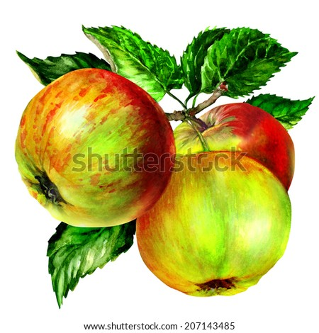 group of apple with leaf on branch - stock photo