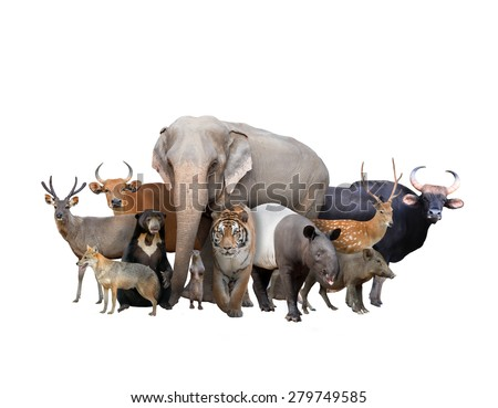 group of asia animals isolated on white background - stock photo