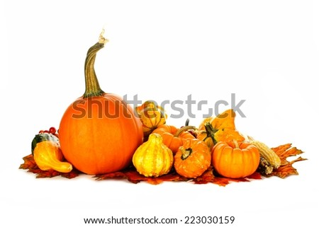 Group of autumn pumpkins and vegetables over white - stock photo