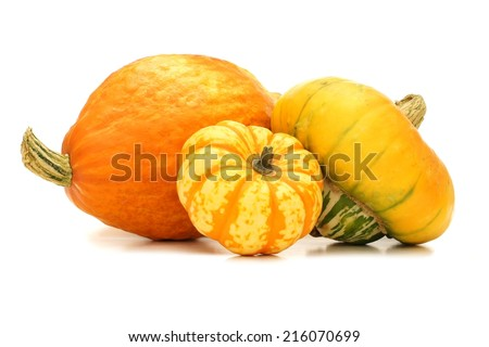 Group of autumn squash over a white background - stock photo