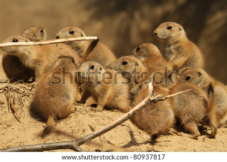 Group of baby prairie dogs - stock photo