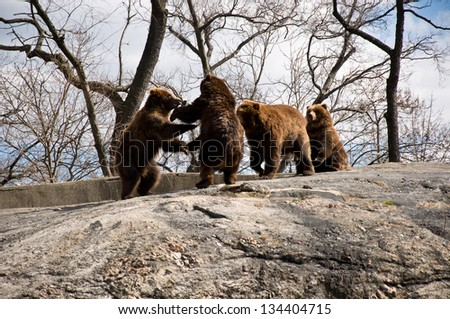 group of bears oudoors in spring - stock photo