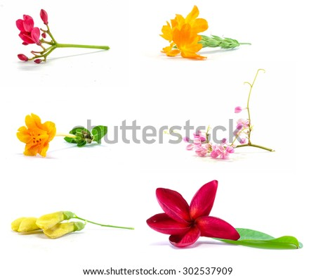 Group of beautiful flower isolated on white background - stock photo