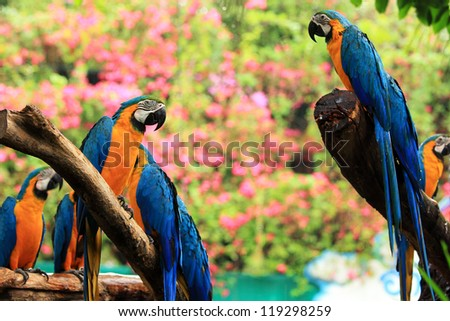 Group of beautiful parrot macaws on  tree - stock photo