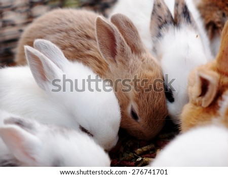 group of Beauty Cute sweet Little Easter Bunny rabbits baby in variety colors black brown and white - stock photo