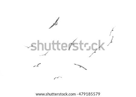 Group of birds fly, Isolated on white background