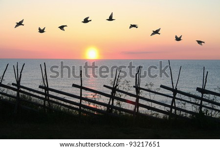 Group of birds flying in formation in front of sunset.