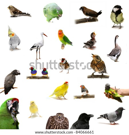 Group of  birds on the white background - stock photo