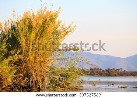 Group of birds sitting in the reed at sunset along the river - stock photo