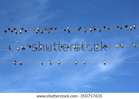 Group of Birds sitting on wires on against the sky like notes