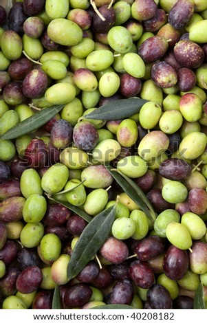 Group of black and green olives - stock photo
