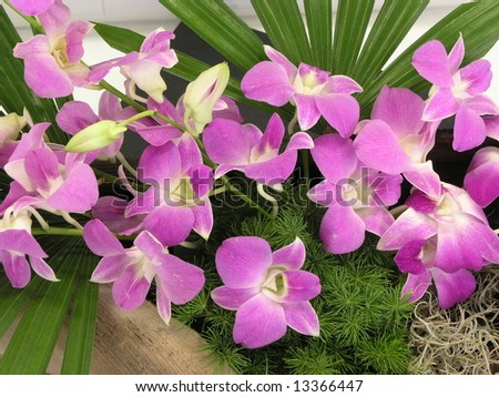 Group of bright pink orchid flowers - stock photo