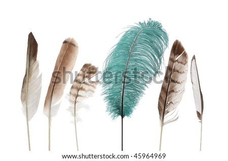 group of brown and white feathers with one large green feather - stock photo