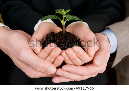 Group of business hands holding a fresh young sprout. Symbol of growing and green business - stock photo