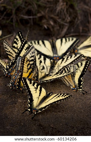 Group of butterflies on the ground - stock photo