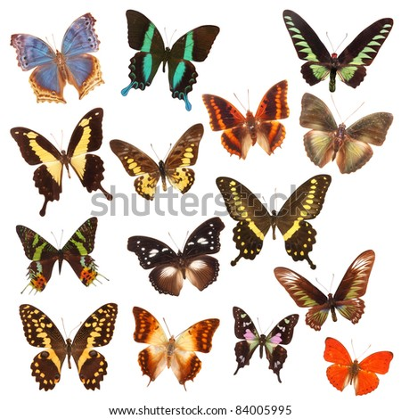 group of butterfly - stock photo