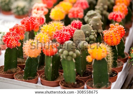 Group of cactus in greenhouse growing - stock photo