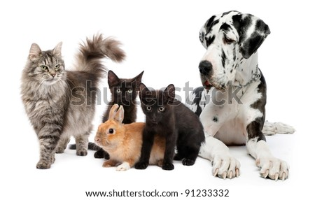Group of cats and dogs and rabbit - stock photo