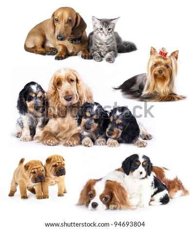 Group of cats and dogs in front of white background - stock photo
