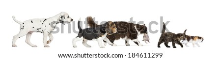 Group of cats and dogs walking - stock photo