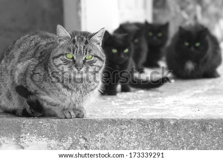 Group of cats with green glowing eyes sitting and looking at camera. Black and white image - stock photo