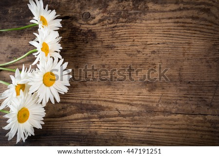 group of chamomile flowers on wooden background with space for text - stock photo