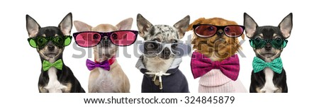 Group of Chihuahuas wearing bow ties and glasses in front of a white background - stock photo