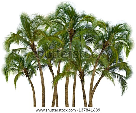 Group of coconut palm trees isolated on white background - stock photo