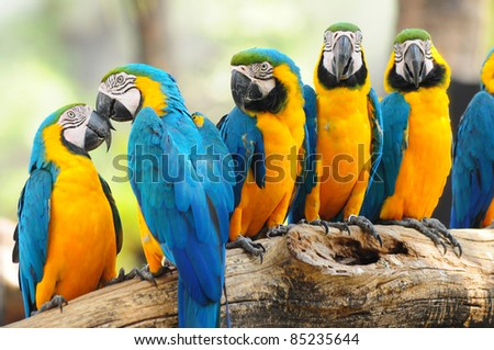 group of colorful macaw on the tree - stock photo