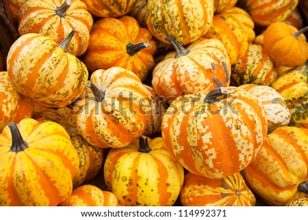 Group of colorful pumpkins on the autumn market - stock photo